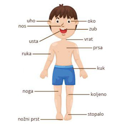 Croatian Vocabulary: Parts of the body